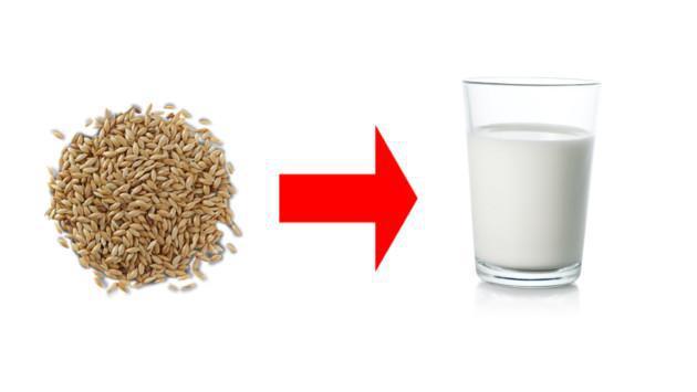 Aprende a preparar leche de alpiste para combatir la diabetes, el sobrepeso, cuidar el hígado y los riñones