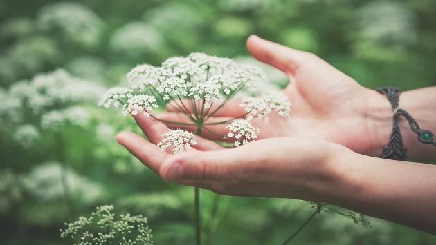 Combate la congestión nasal con estos remedios herbales