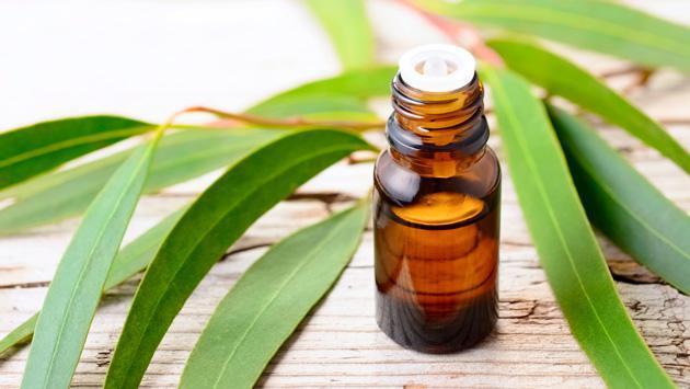 Conoce estos remedios caseros con eucalipto
